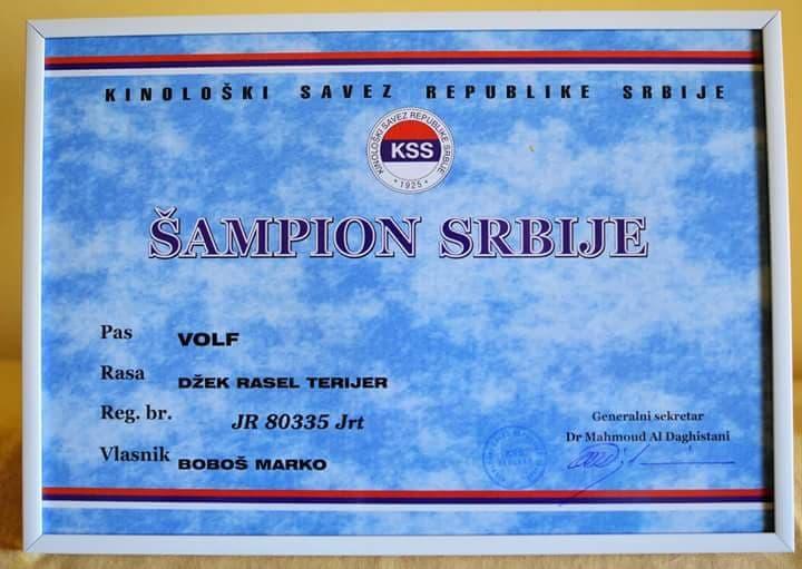 Volf Champion Titel 2.
