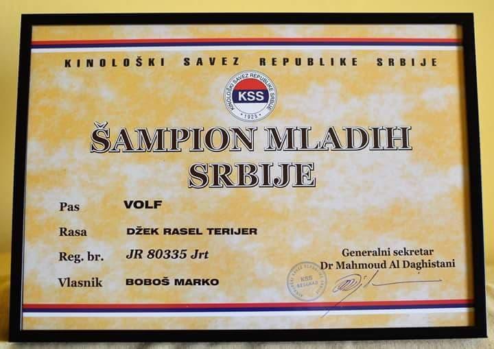 Volf Champion Titel 3.