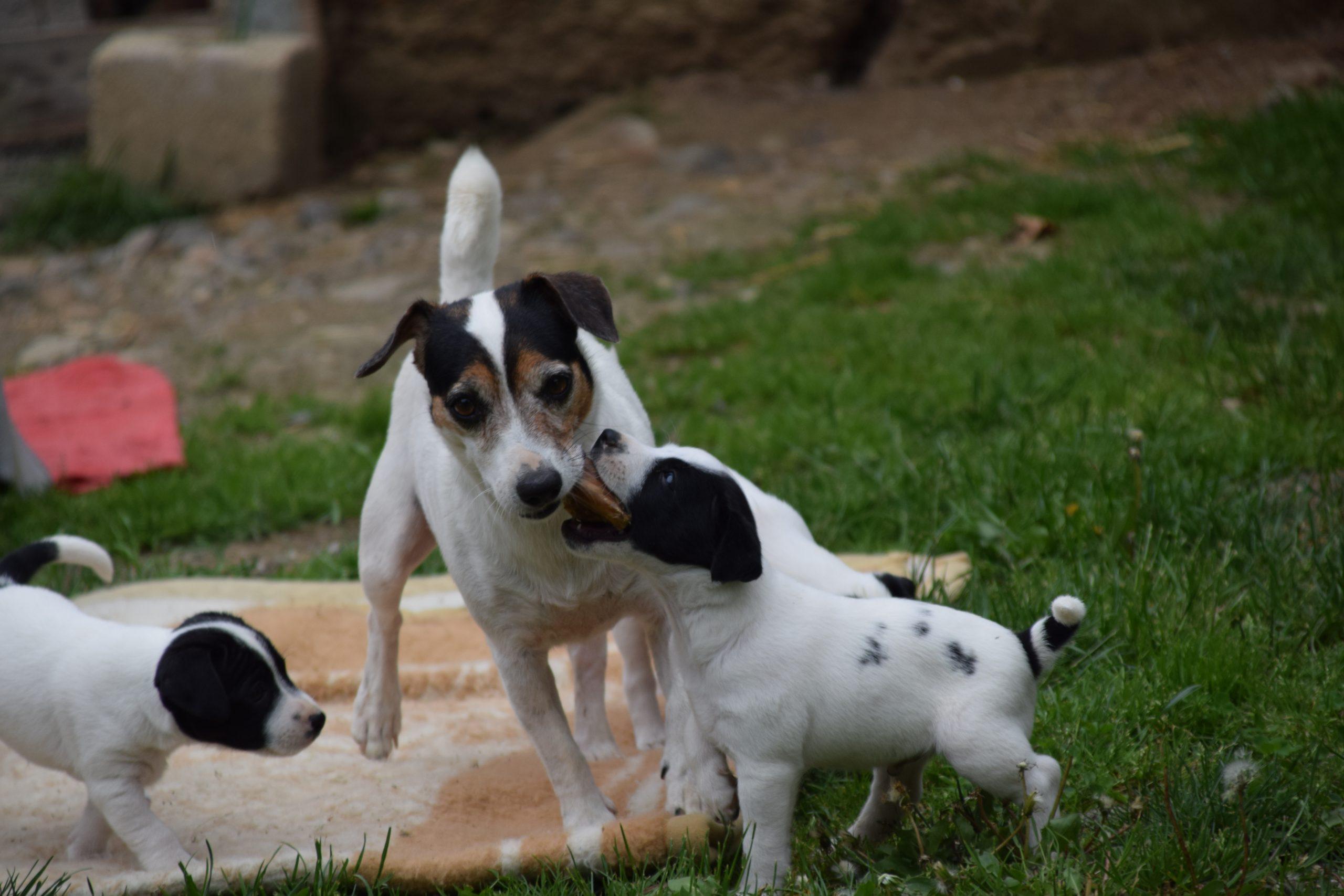 Olivia und Snoopy2.