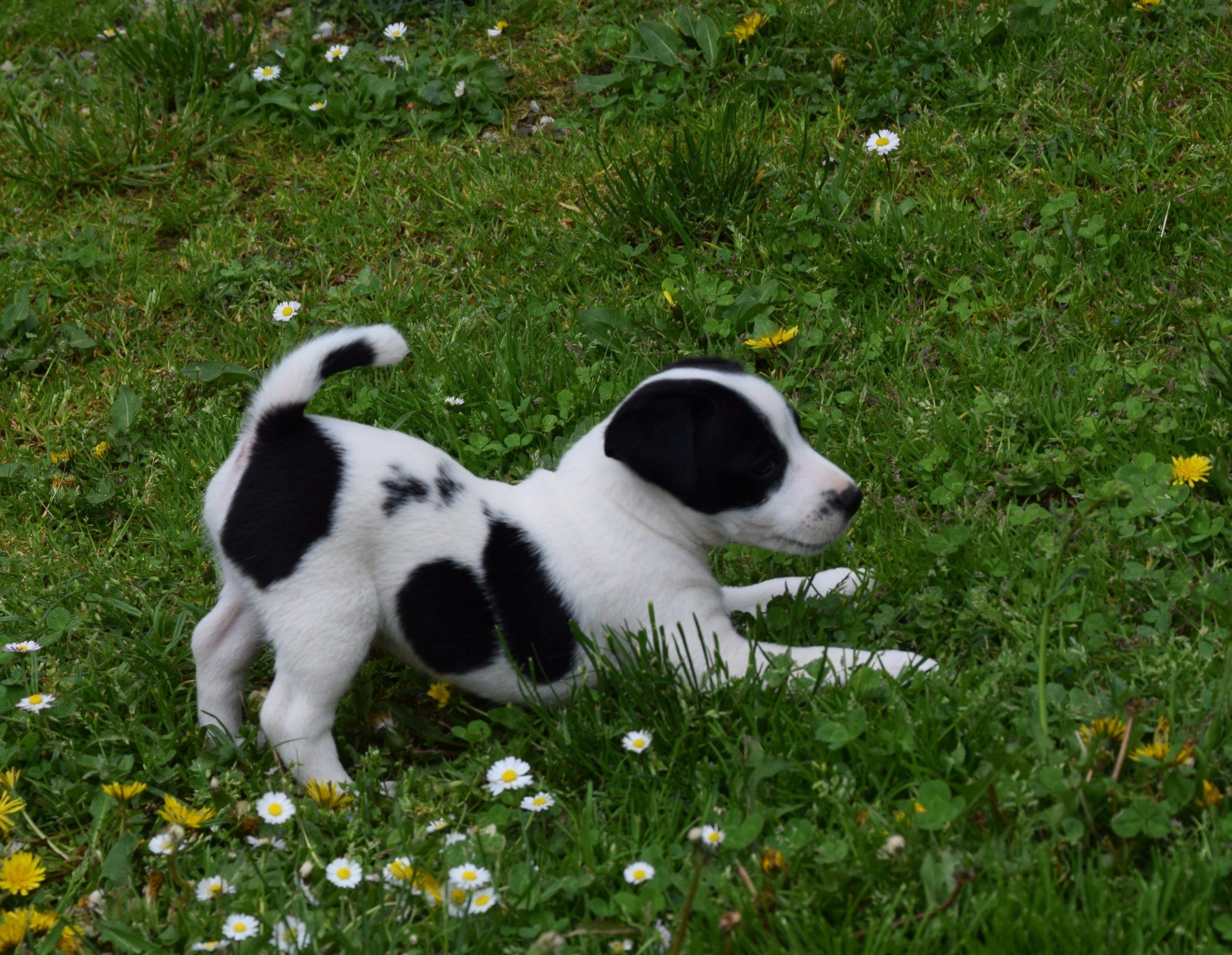 Snoopy 6. Wochen 2.