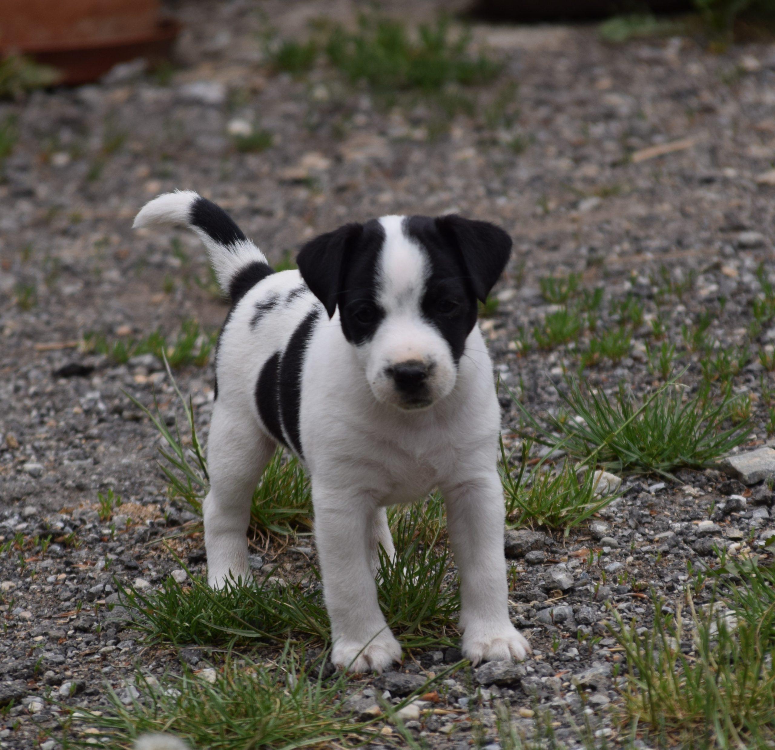 Snoopy 6. Wochen 9.